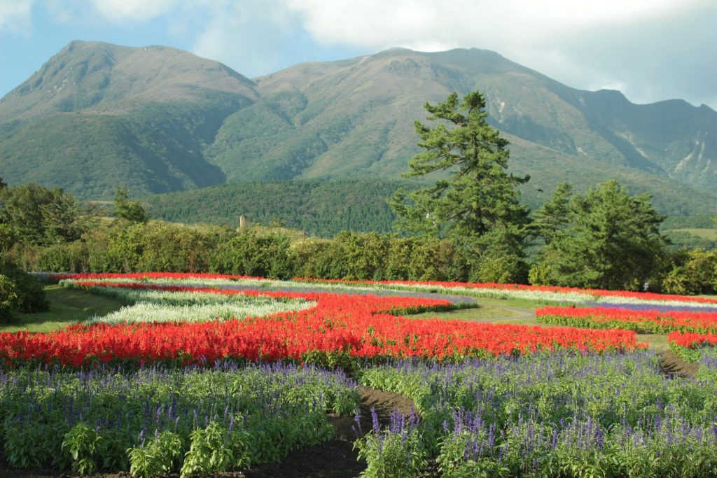 A day trip to Oita by bus is not complete without visiting the vast garden with the backdrop of the Kuju Mountains as seen in this photo.
